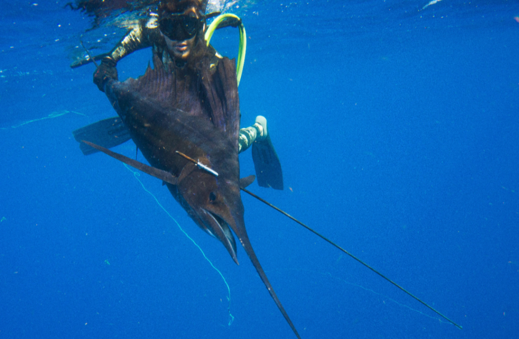 Spearfishing Caribe offers the best spearfishing charters for all skill levels in Cozumel, Cancun, Playa del Carmen, Holbox, Isla Mujeres, and Tulum.
