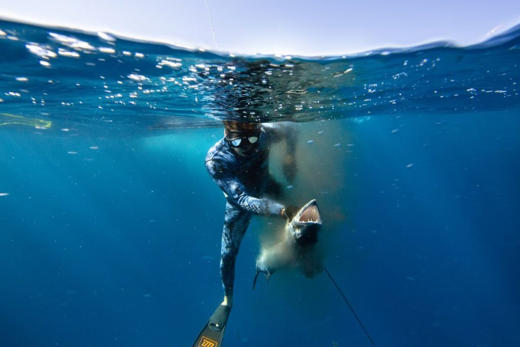 Spearfishing Cancun Mexico Spearfishing Trips The Best Underwater Adventure