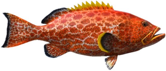 Grouper: February 01 to March 31